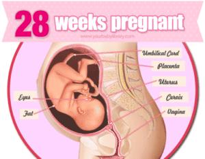 28 weeks pregnant