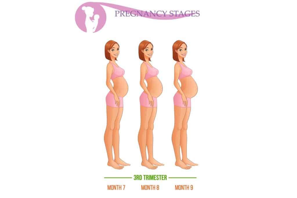 third trimester 01