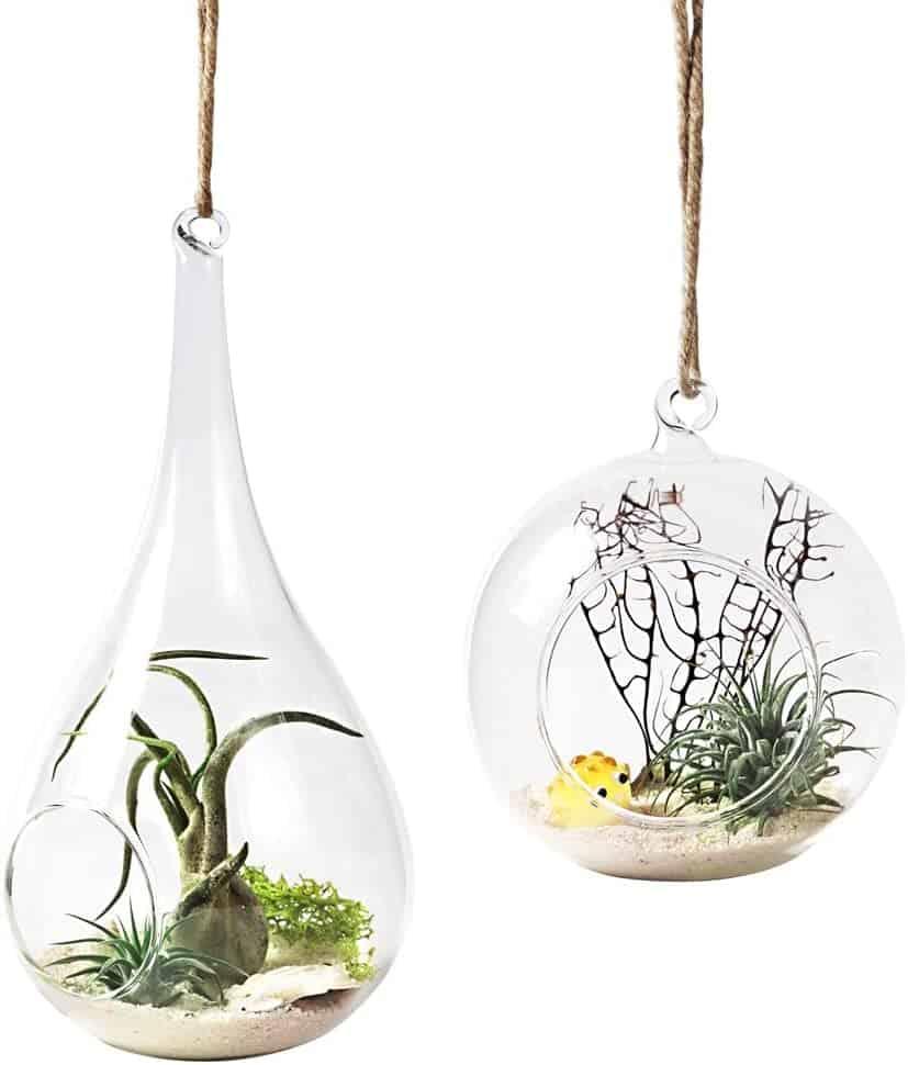 Mkono 2 Pack Glass Hanging Planter Air Fern Holder